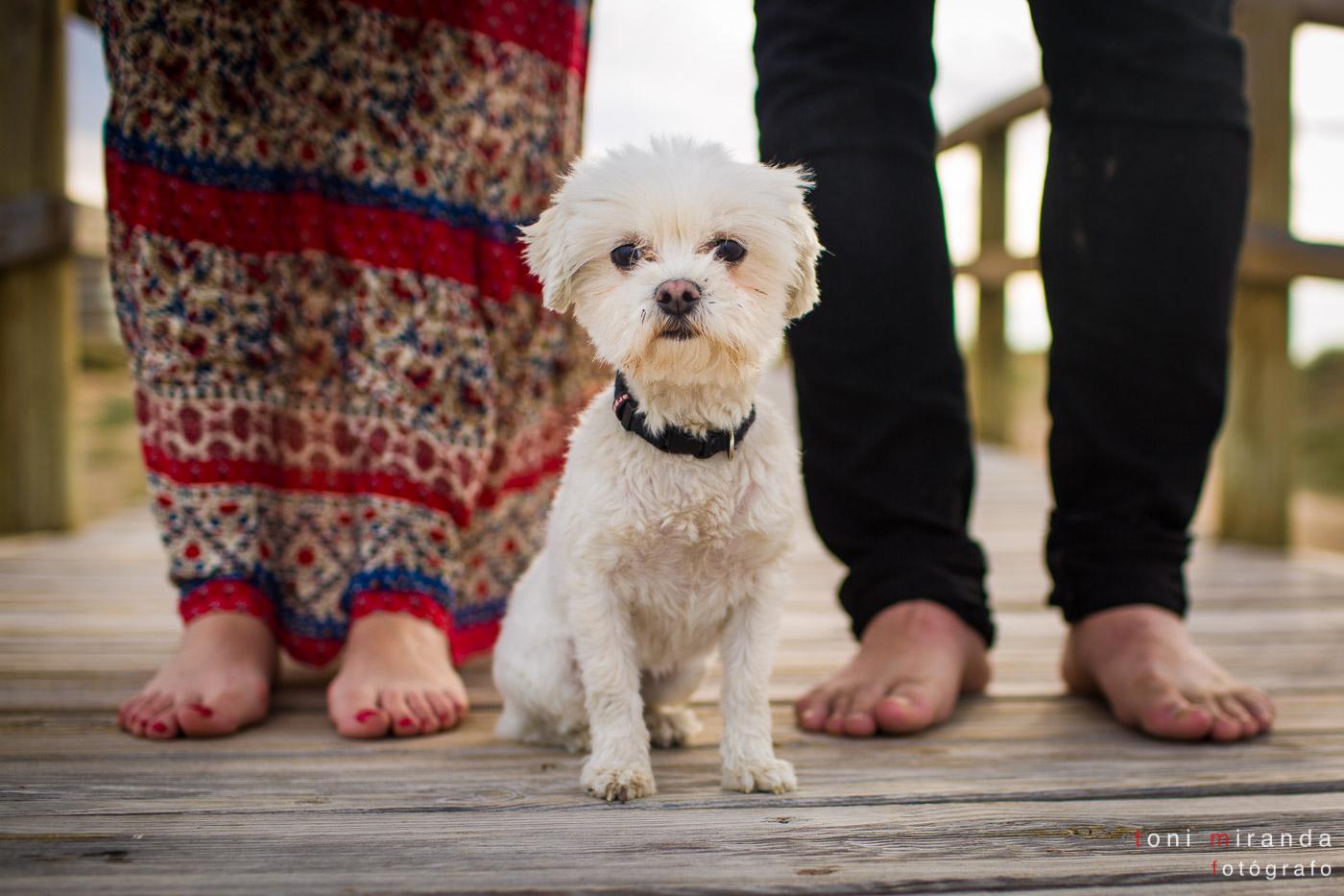 perro acompañando a novios en su preboda